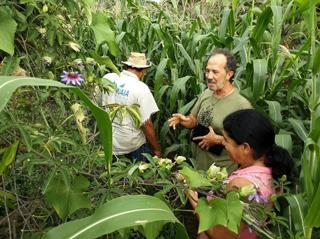 Unidades de Referência da Pouso Alto Agroecologia